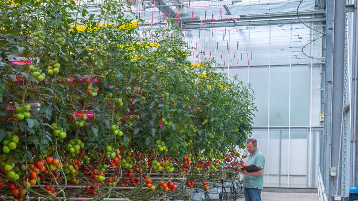 A closer look on the greenhouse lighting solutions of Philips Lighting in place and working at GreenQ