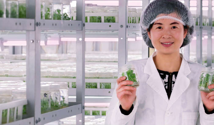Shanghai Xing Hui Seedling Co. Ltd