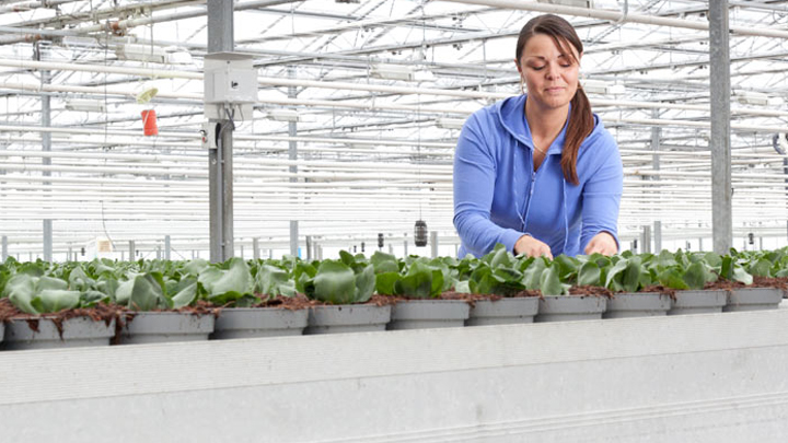 Philips horticultural lighting provides year-long healthy growth for plants at Kwekerij Vreugdenberg, the Netherlands