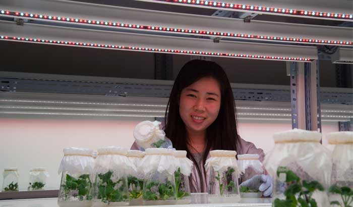 Beijing Vegetable Research Centre