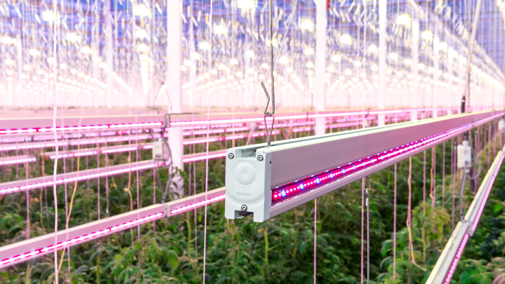 Colorful Philps lighting luminaire illuminated the greenhouse