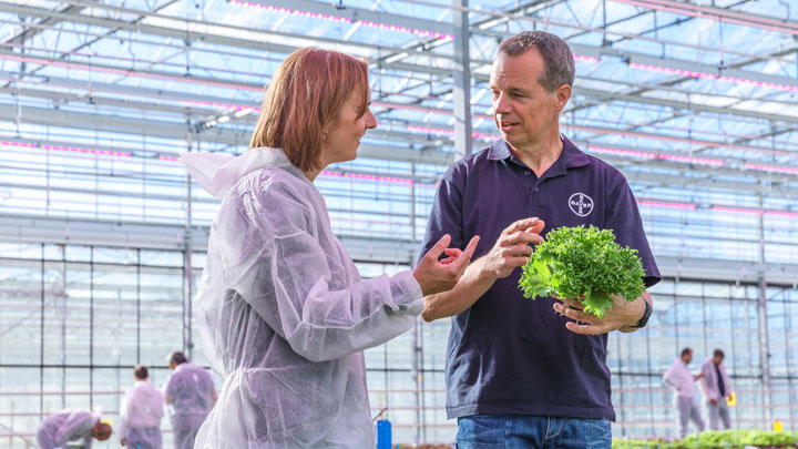 Peter Does, Account Manager Hydroponic Lettuce, Bayer