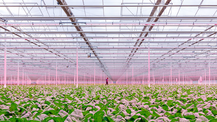 GreenPower LED toplighting in the greenhouse of Siberia