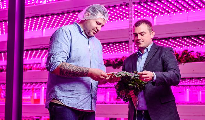 Philips Lighting and Ecobain Gardens transform first commercial vertical farm operation in Canada