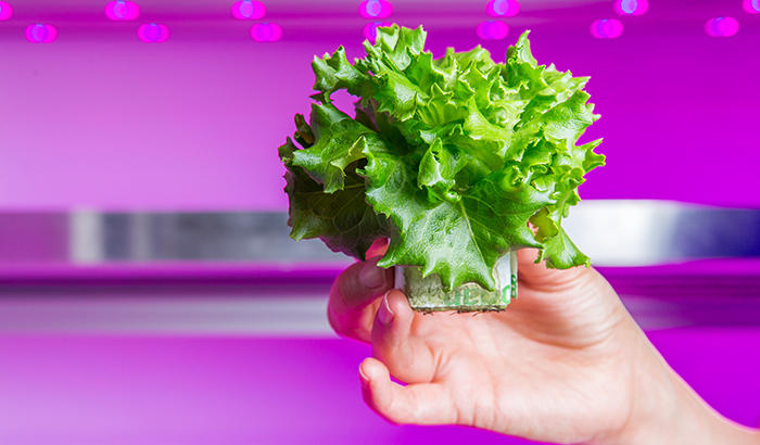 Philips Lighting supports the first large scale commercial vertical farm in Europe