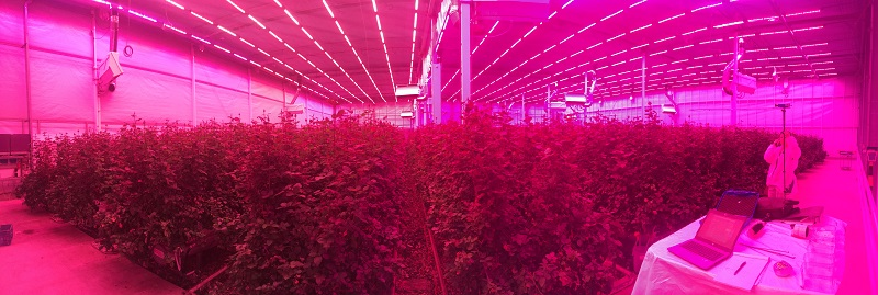 A night shift in the greenhouse for Signify