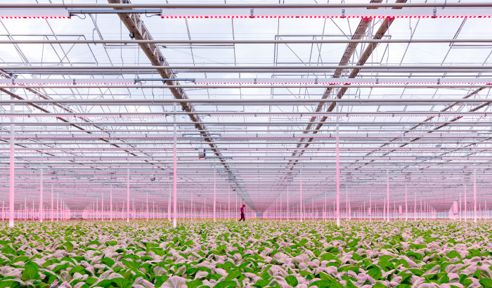 Myths surrounding 'white light' - Do you need 'white' light to grow better crops?