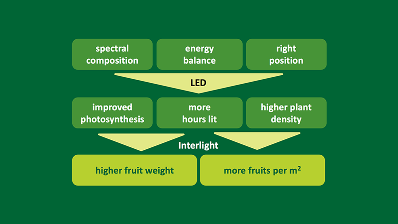 Conclusion - Proven results of LED interlighting for high-wire cultivation
