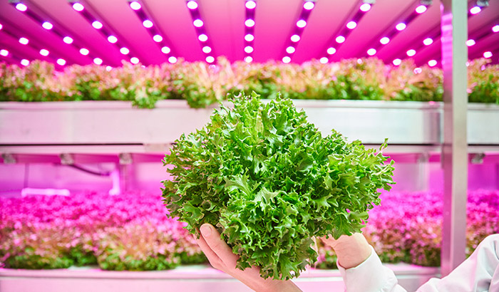 Did you know that a vertical farm can mimic nature?