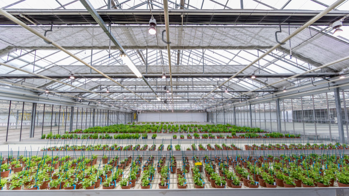 Find out what Philips LED propagation lights can do for your crops in our Floriculture brochure