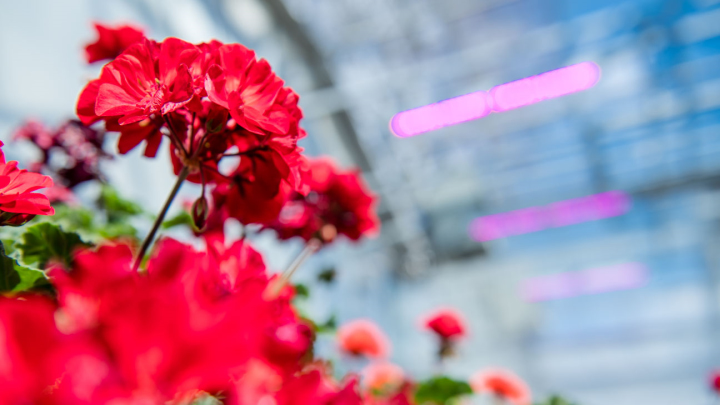 Multi-propagation at Kalamazoo Specialty Plants with LED propagation lights