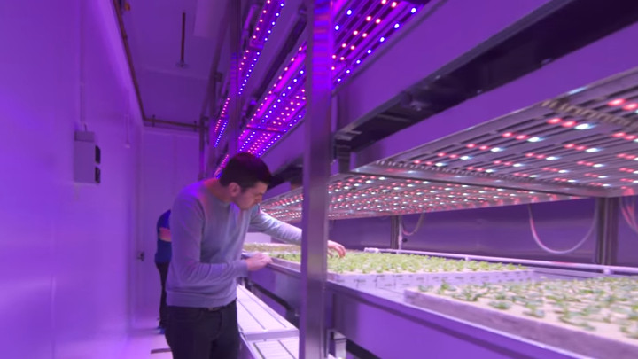 Philips GrowWise Center - Our blueprint for vertical farming