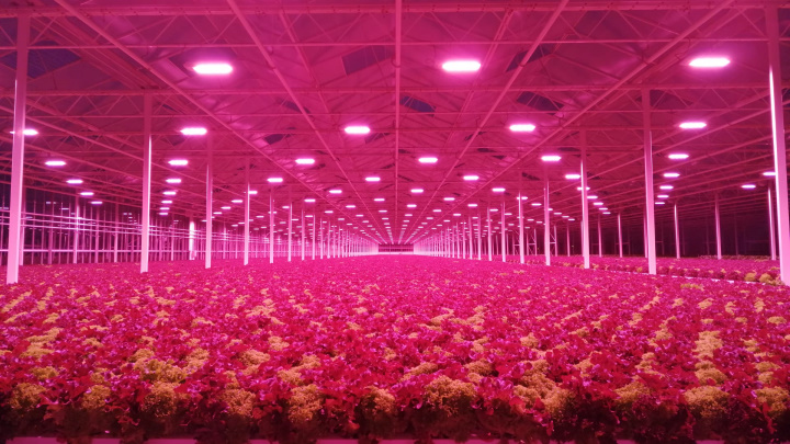 Philips GreenPower LED Toplighting Compact  is installed together with the GrowWise Control System