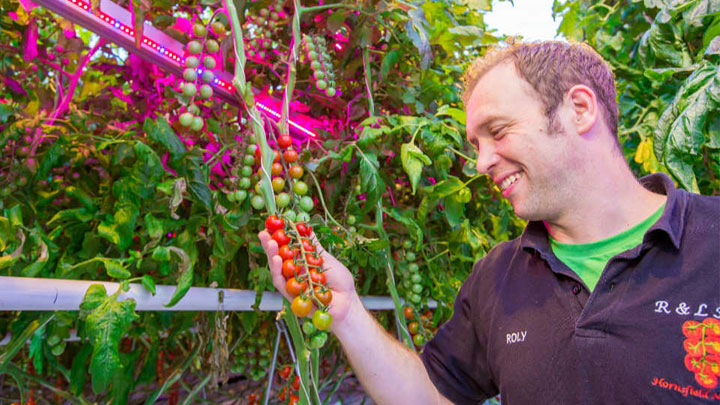 Evesham Vale Growers and R & L Holt have chosen Philips LED and HPS lighting