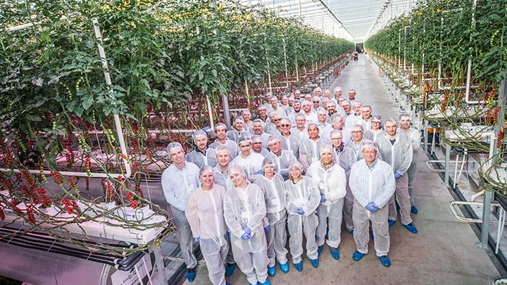 French 100% LED tomato growers share expertise at fourth Philips High Wire Event