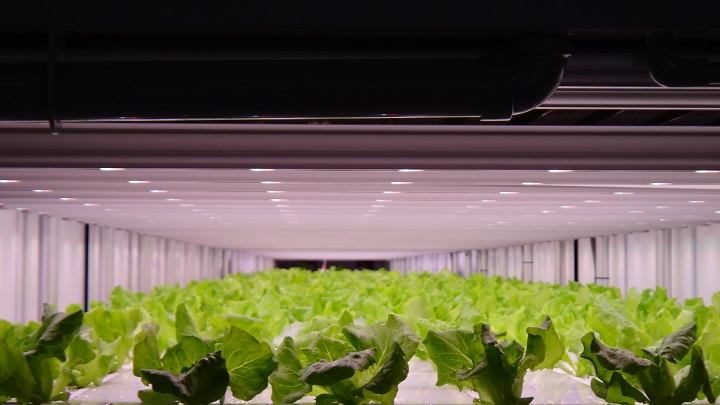 Philips GreenPower LEDs help Prime Delica to grow healthier and safer crops for 7-Eleven customers in Japan