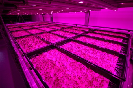 Philips Lighting supports MiniCrops' first vertical farm with GreenPower LED lighting