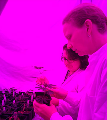 Philips LED lighting on compounds and plant characteristics of medicinal cannabis crops