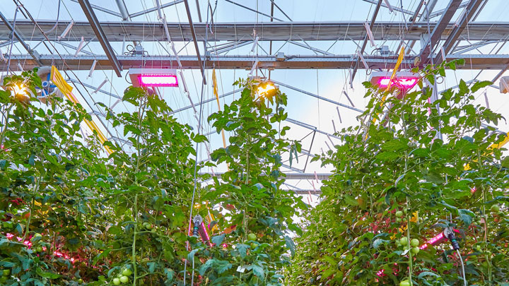 Signify supports Bryte for its new greenhouse equipment with a hybrid Philips LED lighting system
