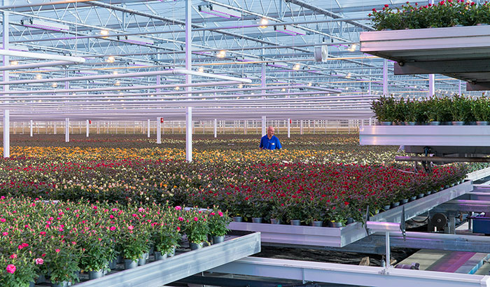 LED solutions for floriculture