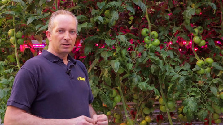 Tomato grower Jami Bergschenhoek explains about interlighting