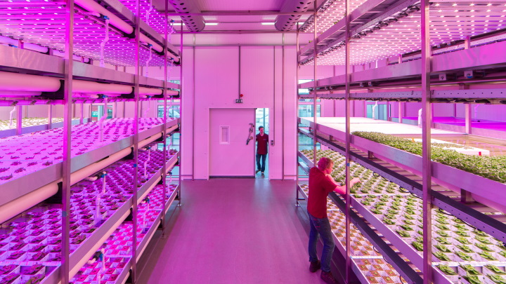 Small-scale climate chamber with vertical farming lighting