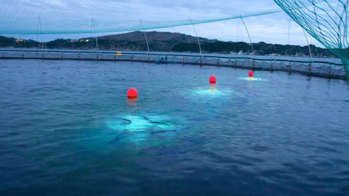 Philips lighting aquaculture