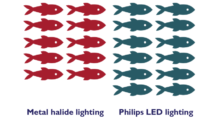 comparison of the growth of fishes with philips led lighting