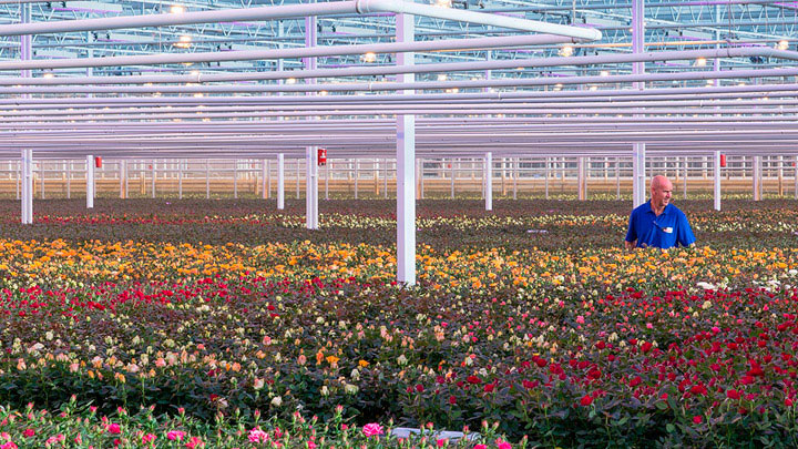 Floriculture supported by LED light